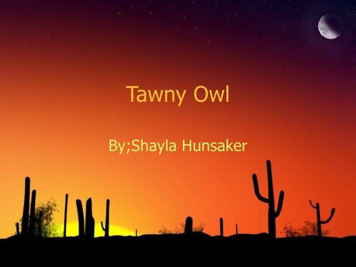 Tawny OwlBy;Shayla Hunsaker