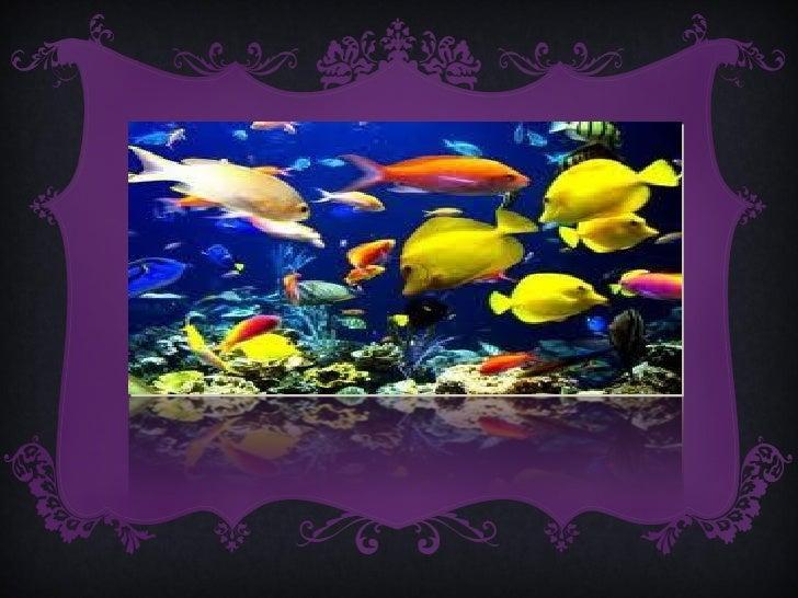 Los equinodermos tienen las siguientes características:• Son animales marinos con simetría radial, como la que tienen la  ...
