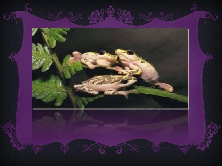 3, Los anfibios ...•   tienen la piel desnuda•   de pequeños respiran por branquias y de pequeños porpulmones•   son terre...