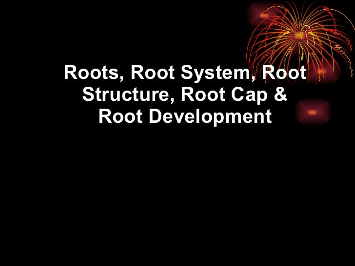Roots, Root System, Root Structure, Root Cap & Root Development