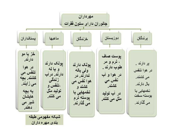 Image result for دسته بندی مهره داران