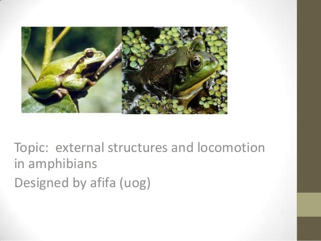 Topic: external structures and locomotionin amphibiansDesigned by afifa (uog)