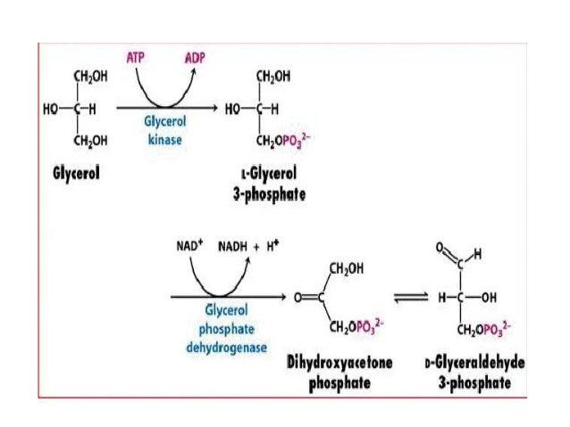 Beta (β) Oksidasi Asam Lemak