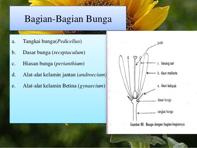 Presentation1 9 simetri pada bunga ccuart Gallery