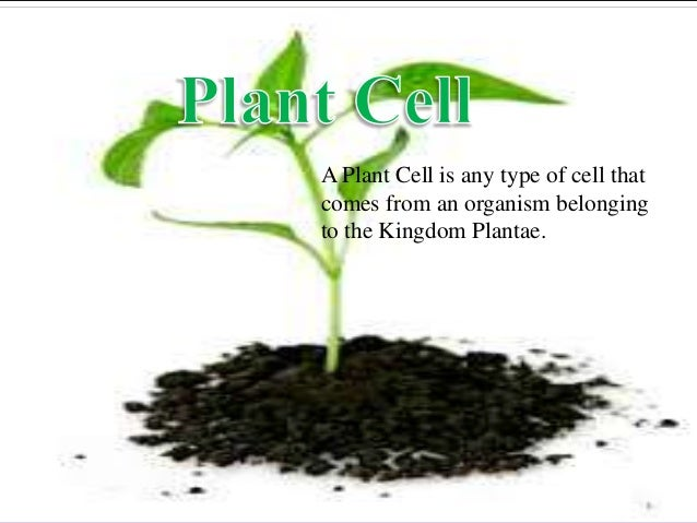 A Plant Cell is any type of cell that comes from an organism belonging to the Kingdom Plantae.