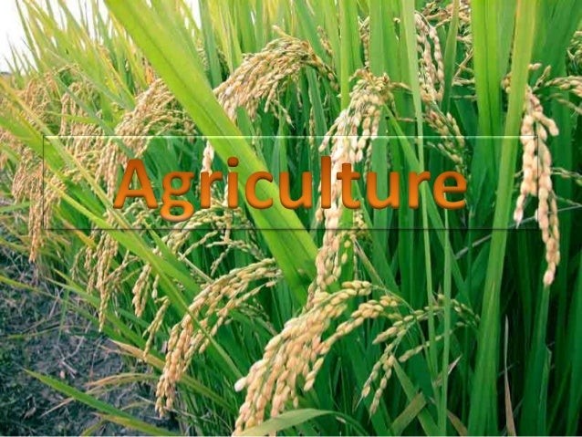 Culture = cultivation agri = soil