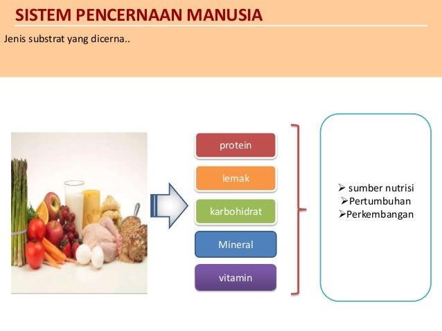 sistem pencernaan ppt