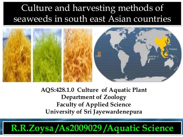 Culture and harvesting methods of seaweeds in south east Asian countries  AQS:428.1.0 Culture of Aquatic Plant Department ...