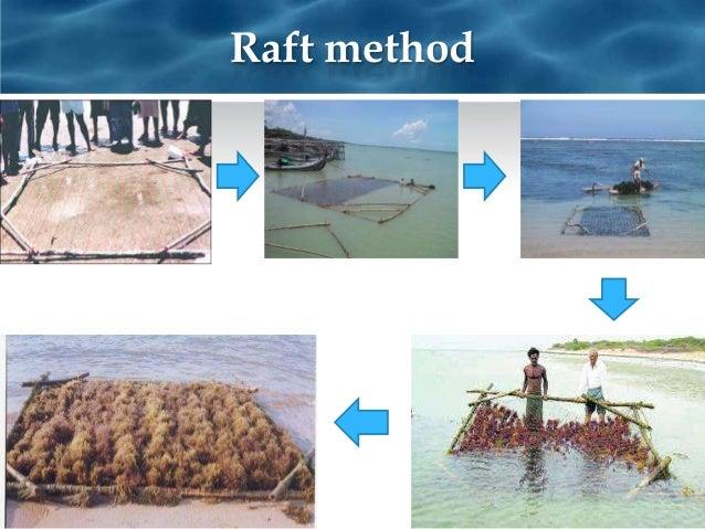 sea weed farming south east asia