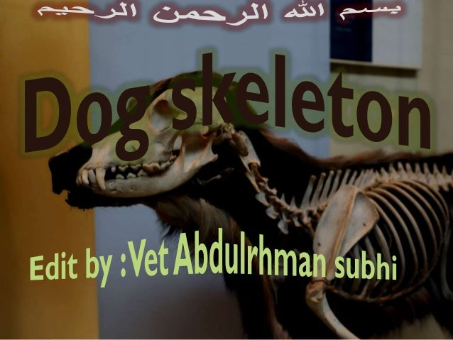 Content : + Axial skeleton -Skull -Vertebrae -Ribs + Appendicular skeleton -Forelimb -Hindlimb + Splanchnic skeleton -Os p...