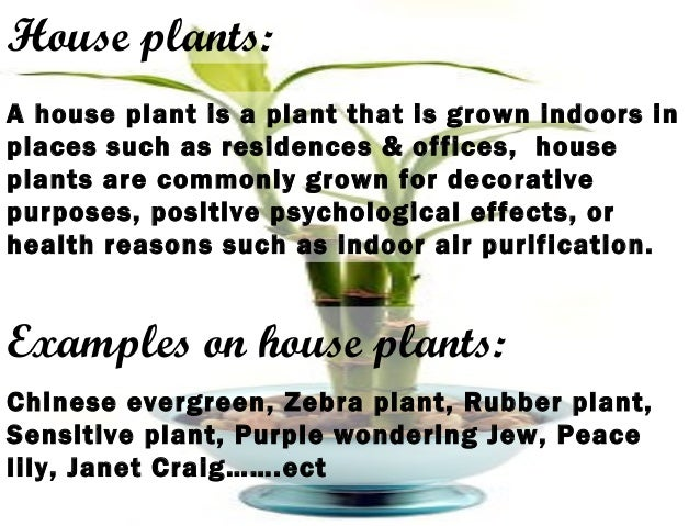 House plants: A house plant is a plant that is grown indoors in places such as residences & offices, house plants are comm...