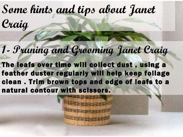Presentation(Indoor plants - Janet Craig) on