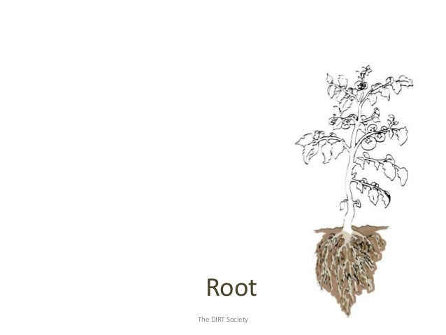 Introduction to Plants and Plant Science (The DIRT Society)