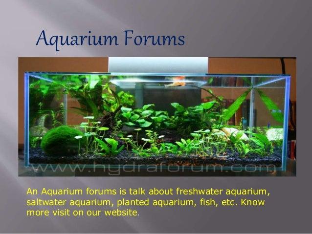 Aquarium Forums An Aquarium forums is talk about freshwater aquarium, saltwater aquarium, planted aquarium, fish, etc. Kno...