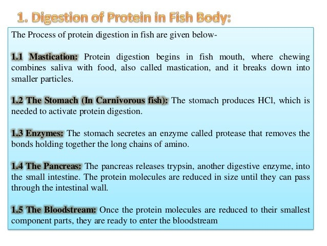 Digestion of different macronutrient in fish for Protein in fish
