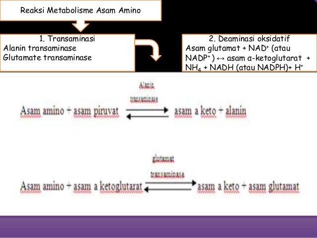 Katabolisme Asam Amino di Tubuh Manusia
