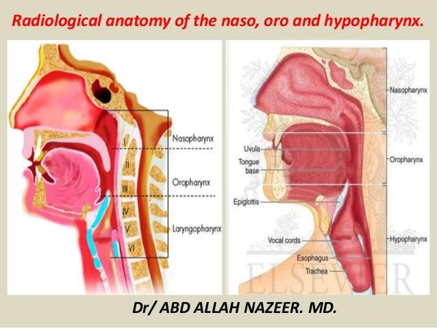 Presentation1.pptx, radiological anatomy of the naso, oro and hypopha…