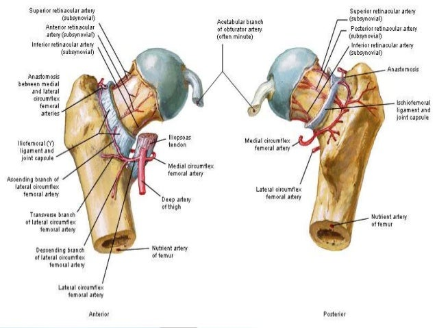 ANESTHETIC MANAGEMENT OF TOTAL HIP REPLACEMENT SURGERY