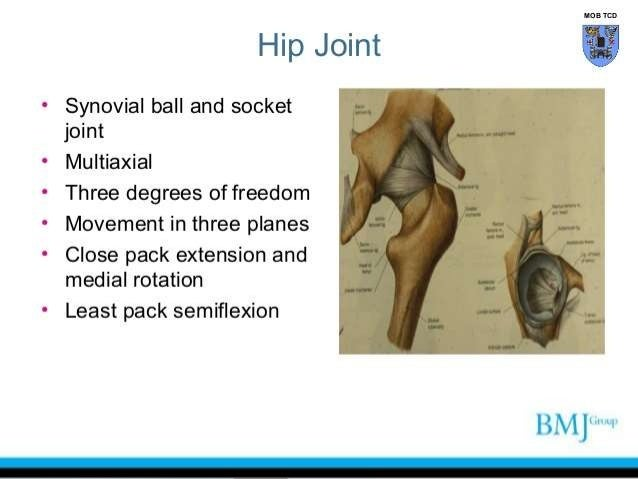 anesthetic management of total hip replacement surgery, Muscles