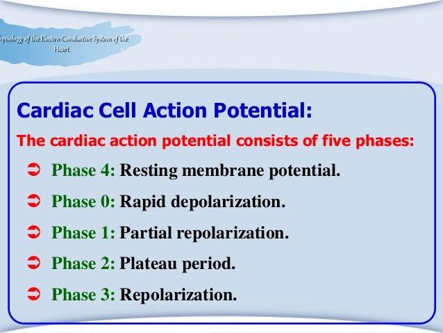 paroxysmal atrial fibrillation treatment guidelines