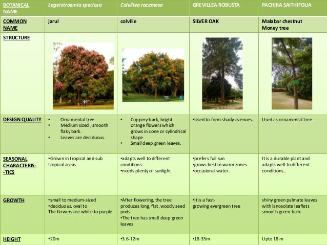 Landscape types plants tree shrubs for Types of landscaping plants