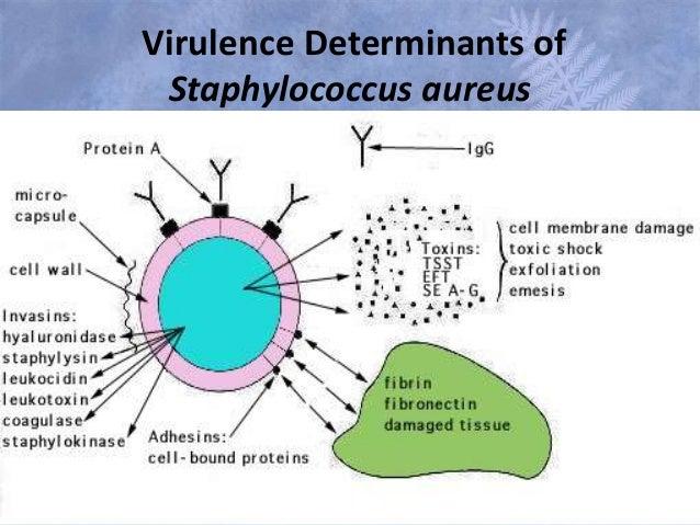 Staphylococcus aureus infection treatment pdf