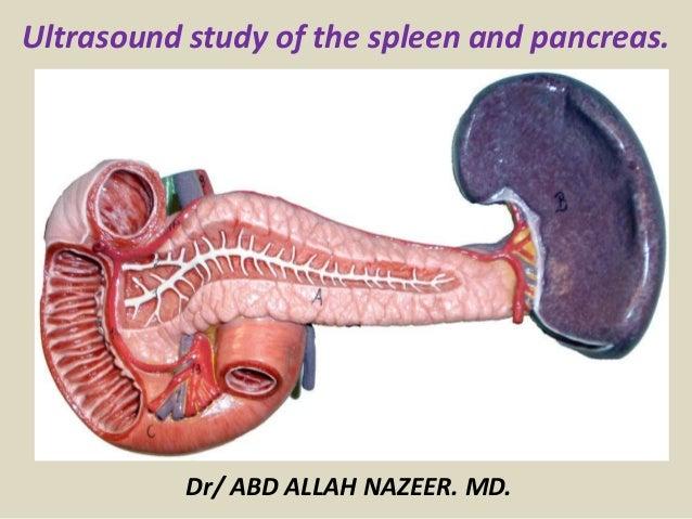 Presentation1pptx Ultrasound Study Of The Spleen And Pancreas