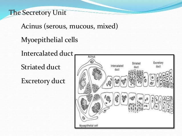 Functions of parotid glands [9] [10] [11]  Protection of the oral cavity and oral enviroment: the constant secretion of s...