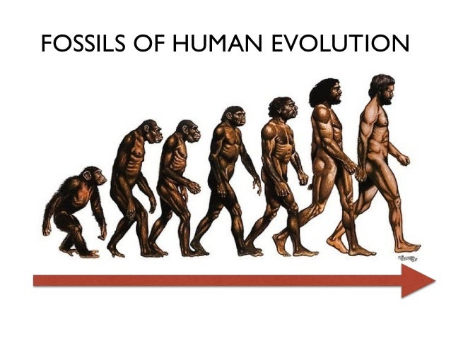 Evolution Of Man 57