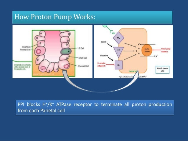 gi system ulceration  role  ppi 638 x 479 · jpeg
