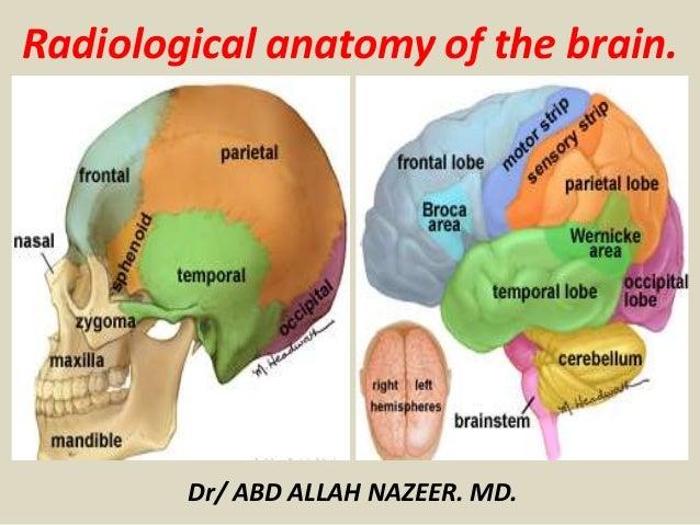 Presentation1.pptx, radiological anatomy of the brain.