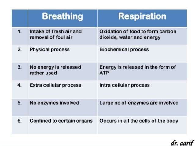 Breathing And Respiration Biology