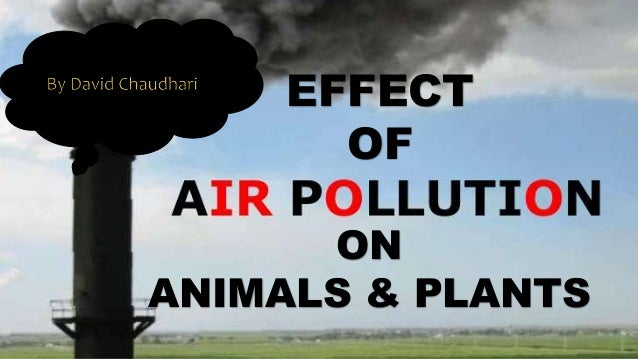 EFFECT OF ON ANIMALS & PLANTS