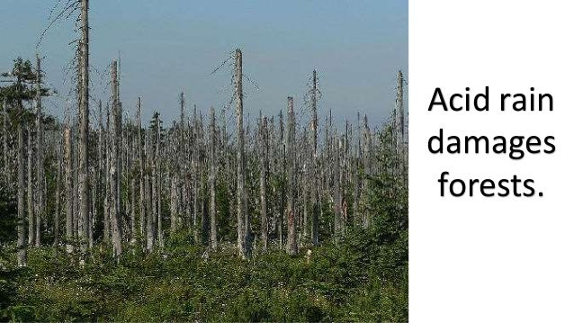 Air Pollution Effect on Animals & Plants Air Pollution Effects On Animals Pics