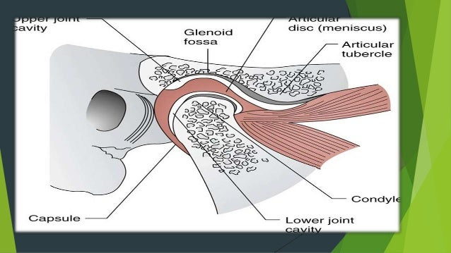 Presentation temporomandibular joint anatomy