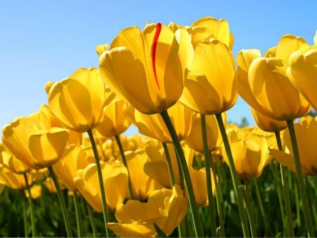 I like flower FLOWER