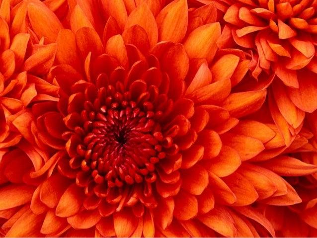 Flower Slide 2