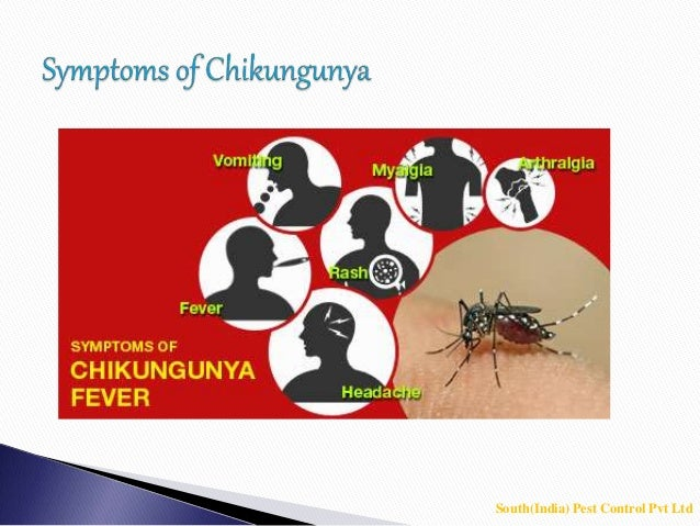 Mosquito - mosquito control bangalore - mosquito control - 웹