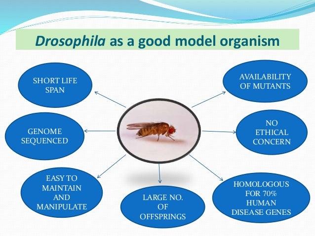 20ae9c76c744 Exploring   Type 2 diabetes   using Drosophila as a study model By MOHD  SAIFULLAH ANSARI