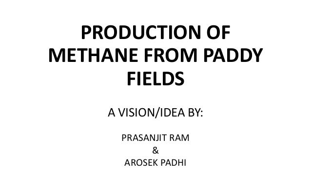 PRODUCTION OF METHANE FROM PADDY FIELDS A VISION/IDEA BY: PRASANJIT RAM & AROSEK PADHI