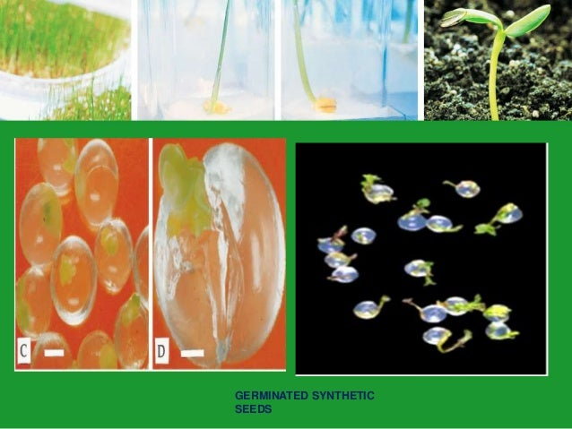 tissue culture methods and applications pdf