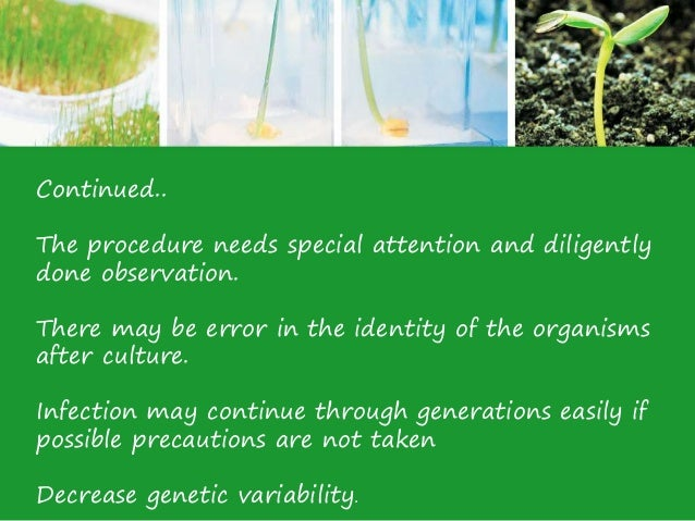 the economic advantages and disadvantages of plants in tissue culture Tissue is a widely used culture in plant biology in which the organisms re planted from the explants of the living plants and disadvantages of tissue culture.