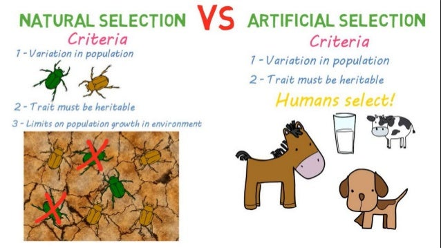 Natural Selection Versus Artificial Selection