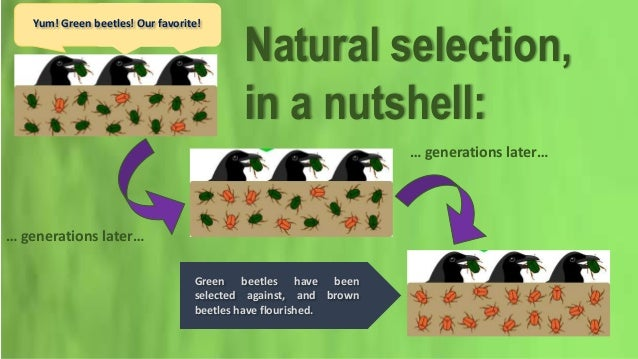 Compare Sexual Selection And Natural Selection