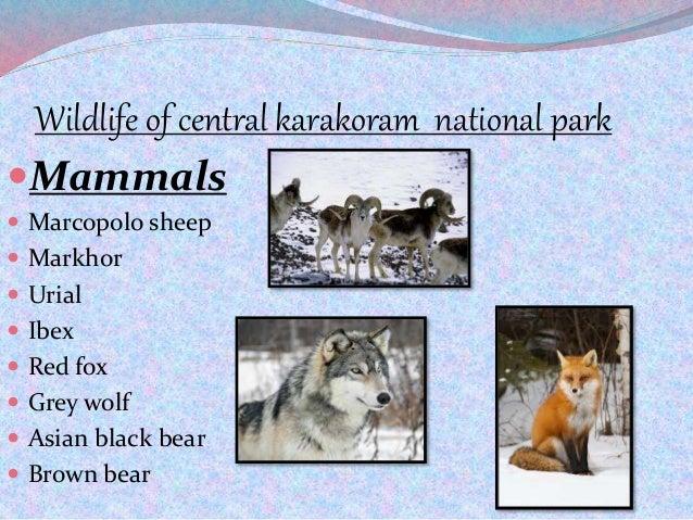 Wildlife of central karakoram national park Mammals  Marcopolo sheep  Markhor  Urial  Ibex  Red fox  Grey wolf  As...