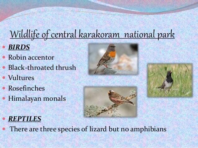 Wildlife of central karakoram national park  BIRDS  Robin accentor  Black-throated thrush  Vultures  Rosefinches  Hi...