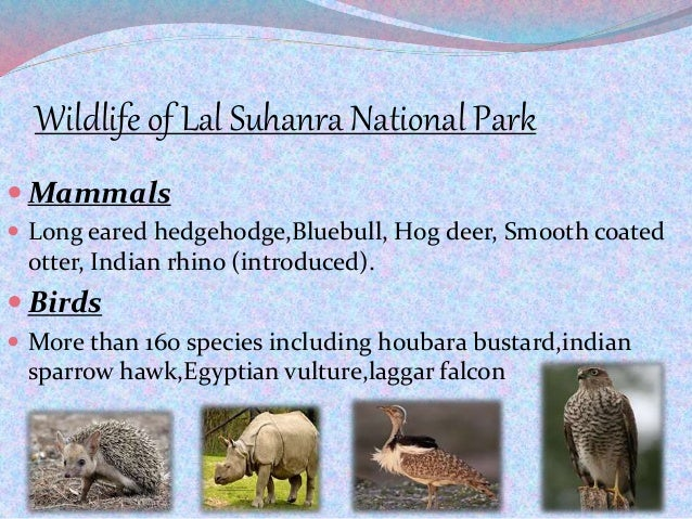 Wildlife of Lal Suhanra National Park  Mammals  Long eared hedgehodge,Bluebull, Hog deer, Smooth coated otter, Indian rh...