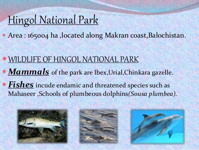 Hingol National Park  Area : 165004 ha ,located along Makran coast,Balochistan. WILDLIFE OF HINGOL NATIONAL PARK  Mamma...