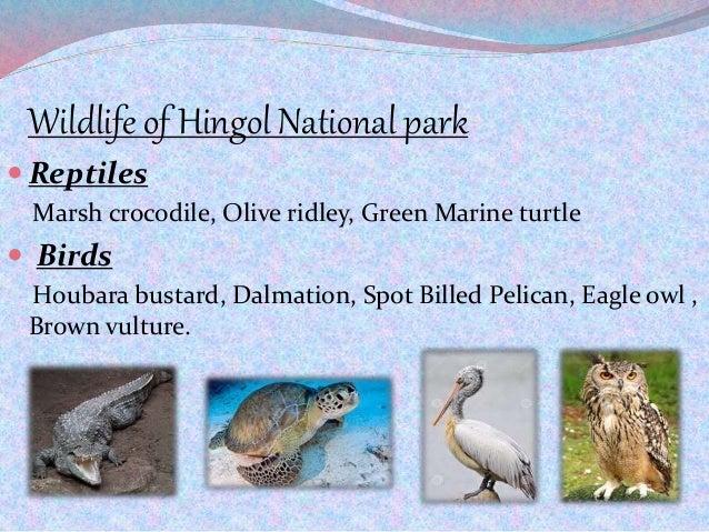 Wildlife of Hingol National park  Reptiles Marsh crocodile, Olive ridley, Green Marine turtle  Birds Houbara bustard, Da...