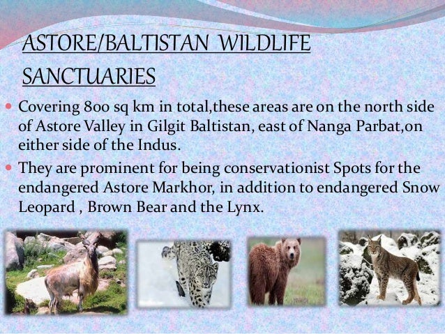 ASTORE/BALTISTAN WILDLIFE SANCTUARIES  Covering 800 sq km in total,these areas are on the north side of Astore Valley in ...